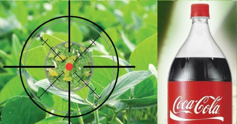 Kesan Penggunaan Coca-Cola Pada Tanaman Yang Wajib Anda Tahu