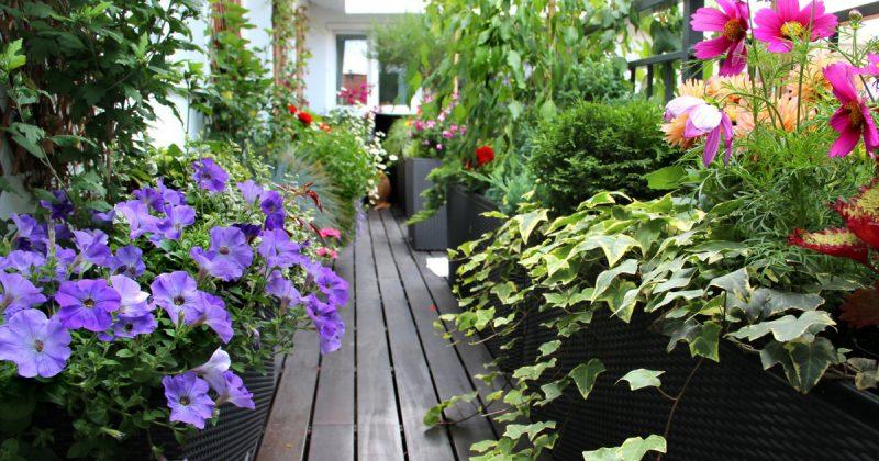 Tip Mudah Tanam Pokok Di Balkoni Atau Ruang Sempit