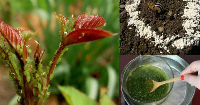 5 Racun Serangga Mudah Hanya Guna Bahan-Bahan Dapur Yang Mujarab. Siri 2