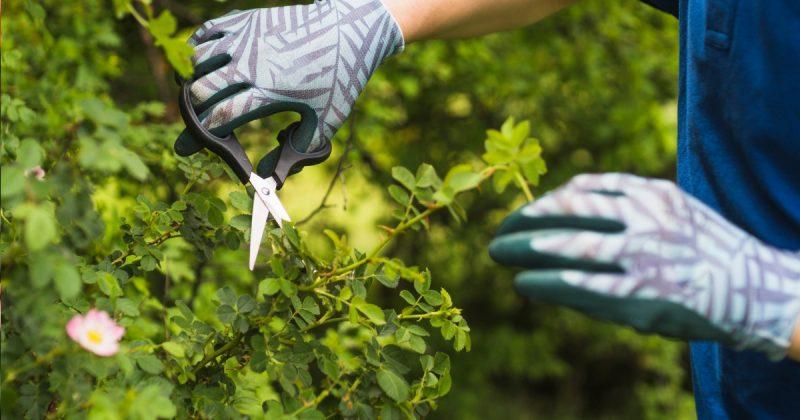 5 Sebab Kenapa Lakukan Pemangkasan Pokok Secara Berkala