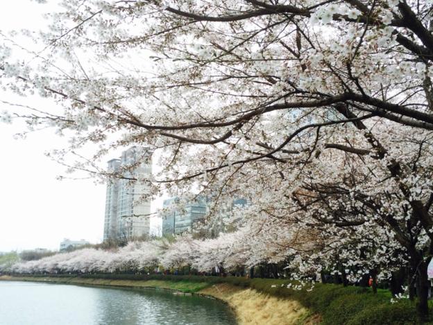 10 Aktiviti Menarik Dan Free Perlu Buat Bila Dah Sampai Di Korea