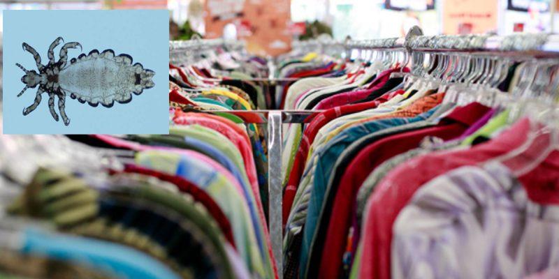 3 Sebab Baju Baru Beli Wajib Dibasuh Sebelum Pakai. Salah Satunya Kerana Kutu Ini