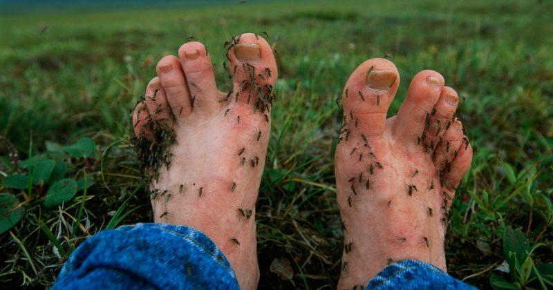 Ini 7 Sebab Kenapa Anda Selalu Jadi Mangsa Gigitan Nyamuk
