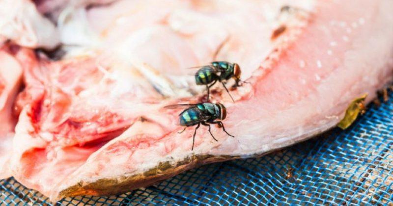 Buat Semburan Ajaib Untuk Halau Lalat Dari Bahan Dapur