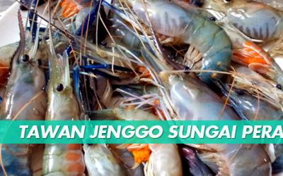 TAWAN JENGGO SUNGAI PERAK